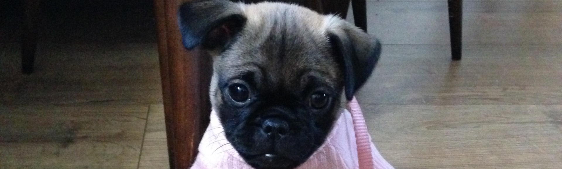 10 things to know before getting a puppy