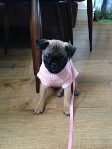 Betty puppy 2
