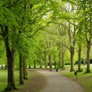 ashcombepark1